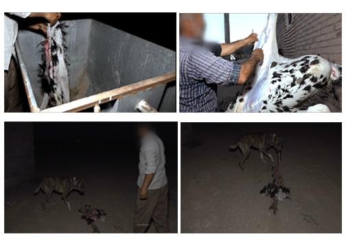 شترمرغ داران در خواب غفلت و سودهای کلان در جیب اروپاییان