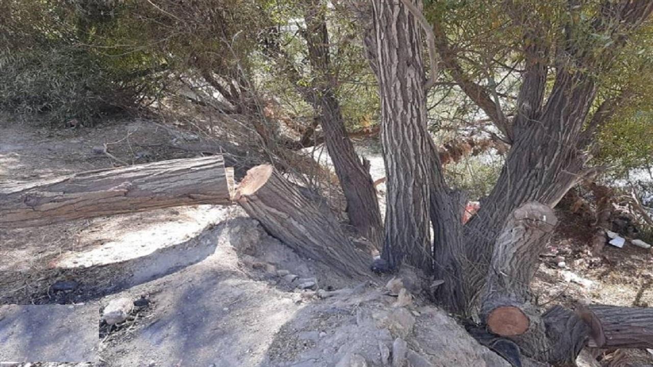 درختی که به فرمان پیامبر (ص) دو نیم شد