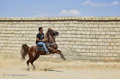 تولید، پرورش و نگهداری اسب
