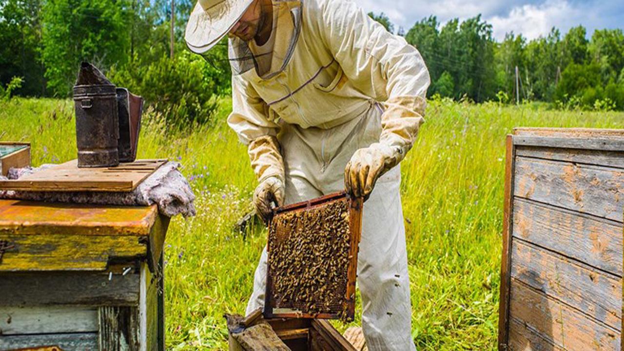 جهش تولید با کار آفرینی عشایر/ پرورش ۵ هزار کلنی زنبور عسل در کهگیلویه