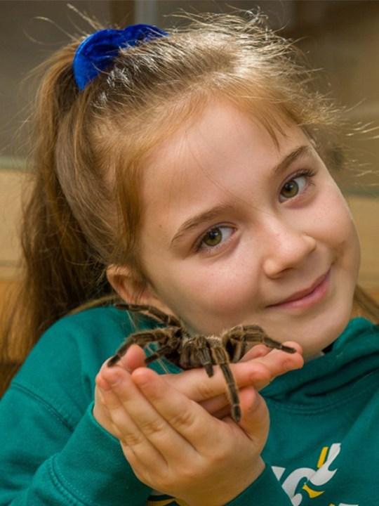 کلکسیون عجیب یک دختربچه از عنکبوتها و مارهای سمی