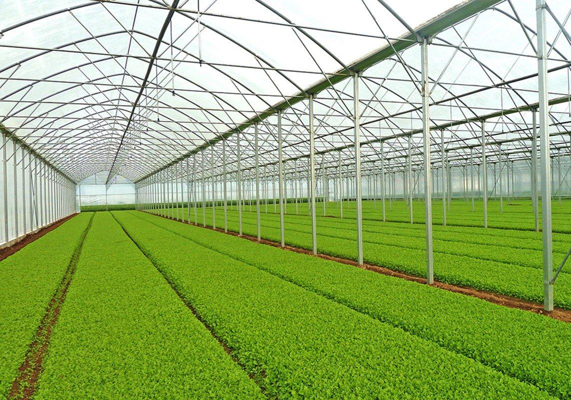کشاورزی در دل کویر