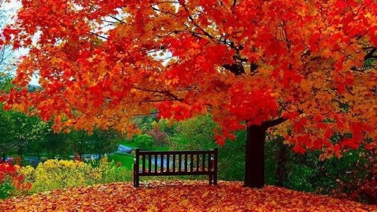 حقایق علمی در مورد تغییر رنگ برگها در فصل پاییز