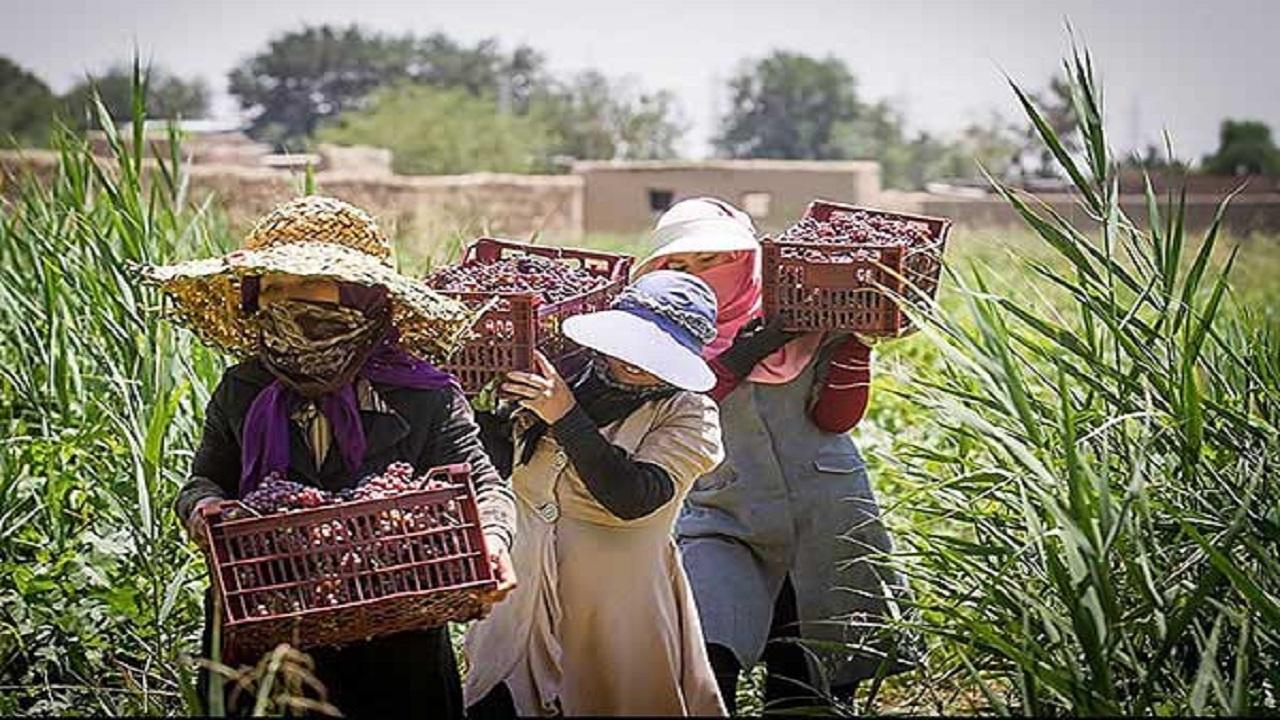 حقوق زنان روستایی در سایه فراموشی
