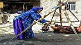 باشگاه خبرنگاران - راه اندازی ۱۲۴ صندوق کارآفرینی و اشتغالزایی به منظور حمایت از زنان روستایی خوزستانی