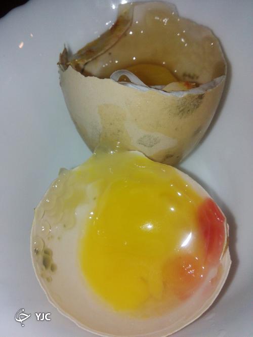 این نوع تخم مرغها را هیچگاه نخورید