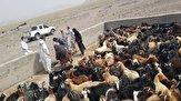باشگاه خبرنگاران - افزونبر ۱۰۰ هزار راس دام در ایرانشهر واکسینه شدند