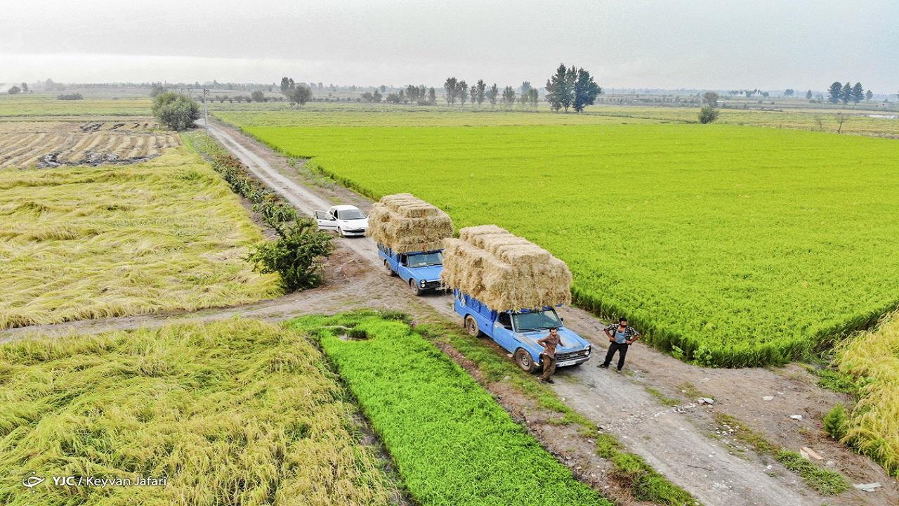 دولت صدای کشاورزان را بشنود؛ نرخ محصولات کشاورزی تناسبی با هزینههای تولید ندارد