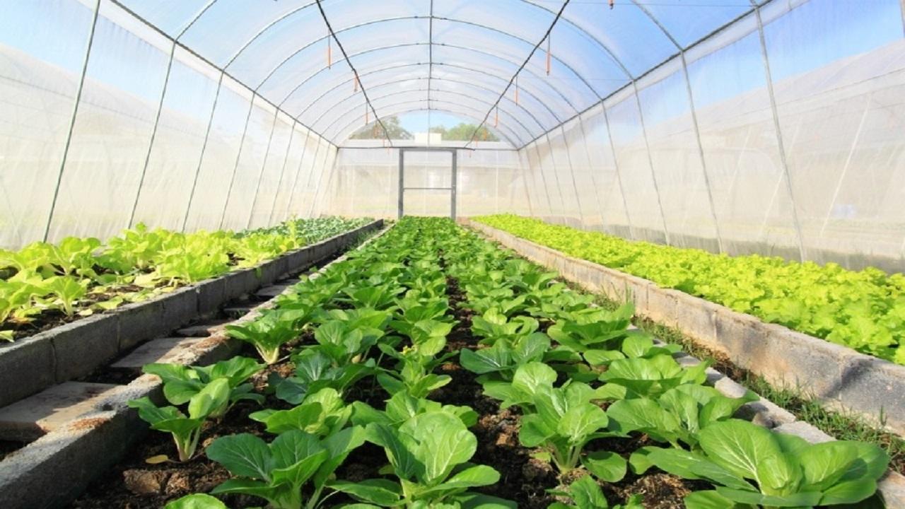 مشکلات پیش روی احداث گلخانهها / حمایت از توسعه گلخانهها، وعدهای سر خرمن!