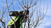 باشگاه خبرنگاران - شهروندان از هرس خودسرانه درختان خودداری کنند