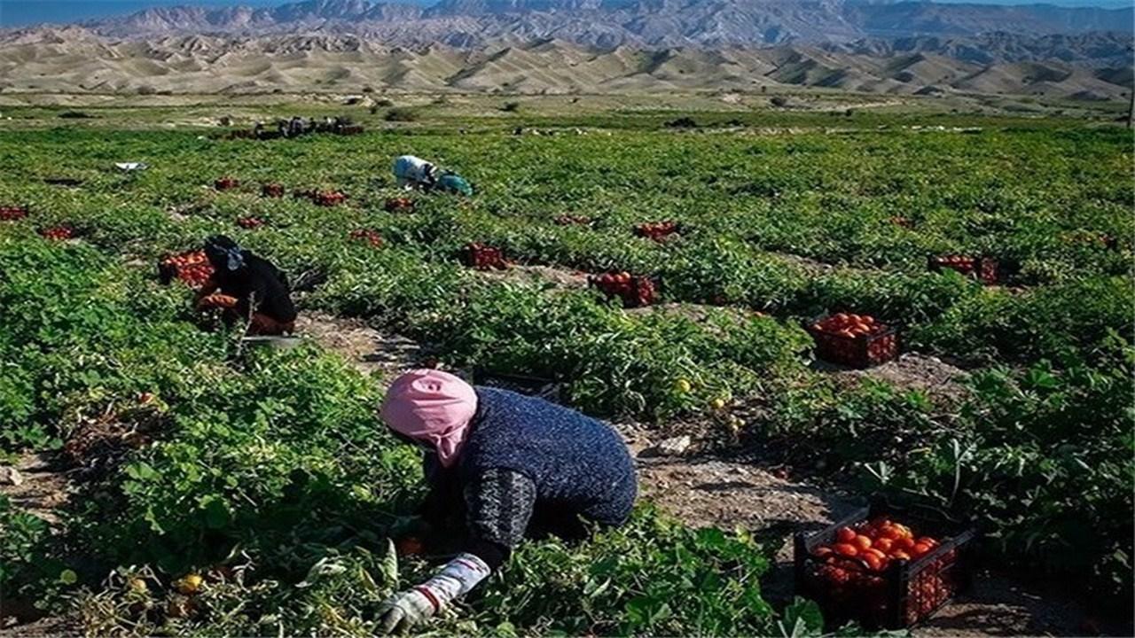 پرداخت ۳۵ میلیارد ریال غرامت بخش زراعت در خراسان رضوی