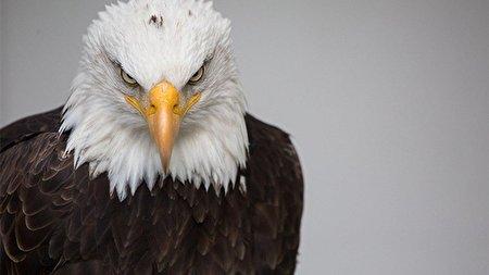 بزرگ ترین عقاب جهان را تماشا کنید + فیلم