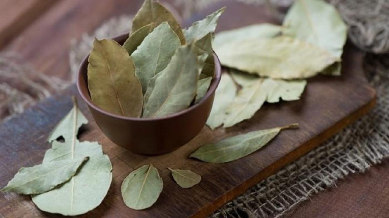 خواص برگ بو؛ گیاهی که یکتنه سرماخوردگی و آنفلونزا را حریف است