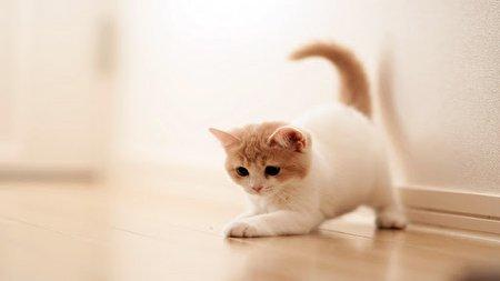 حرکت نمایشی عجیب یک گربه با بدنی بدون استخوان! + فیلم