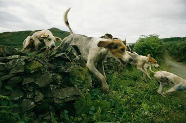 عکس روز نشنال جئوگرافیک از مسابقه شکار سگها