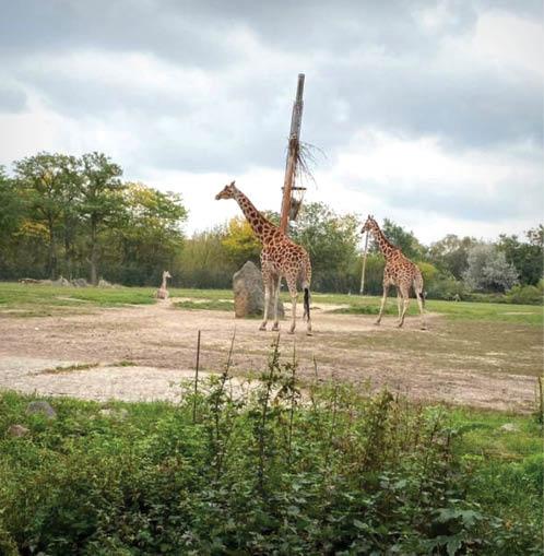 جذابترین پارک حیوانات جهان