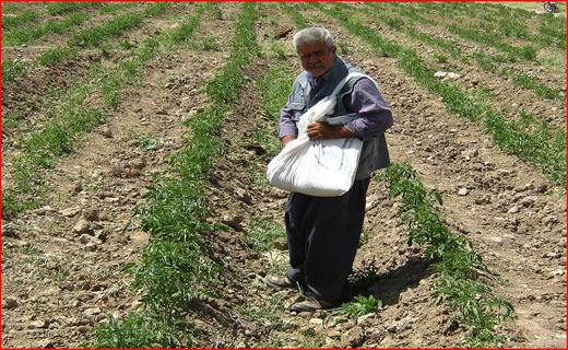 محمود یاوری در گذشت/ ارز نیمایی،کمر کشاورزان را شکست / نوسانات قیمت طلا و سکه به ضرر بازار