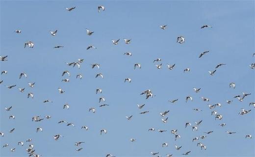 ساحل امن تالابهای اردبیل برای پرندگان مهاجر
