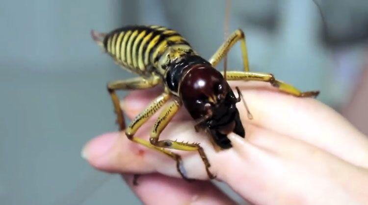 شگفتانگیزترین حشرات جهان + تصاویر