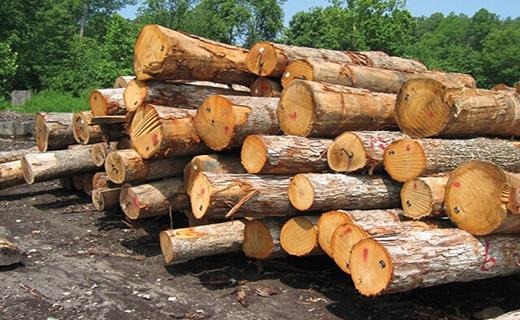 آیا جایگزینی برای قطع بی رویه جنگلهای هیرکانی وجود دارد؟