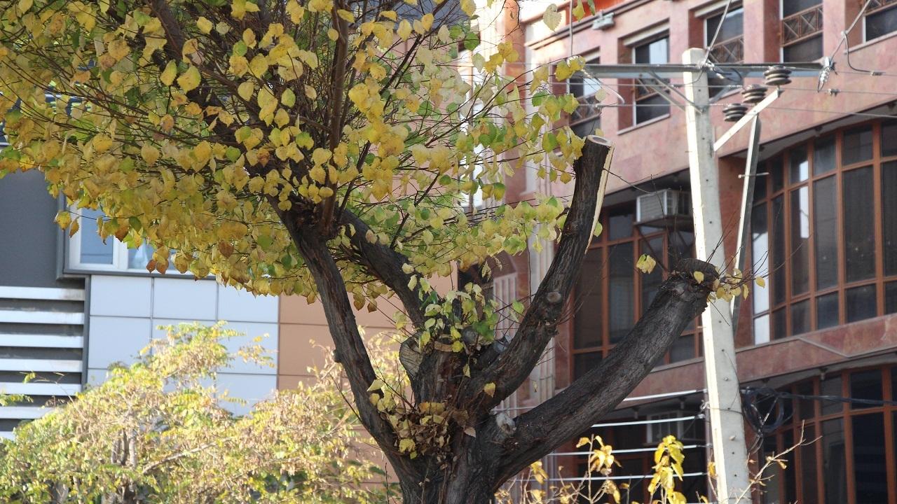هرس غیراصولی درخت