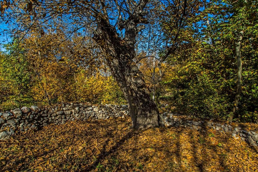 نظاره زیباییهای پاییز کلات از قاب تصویر