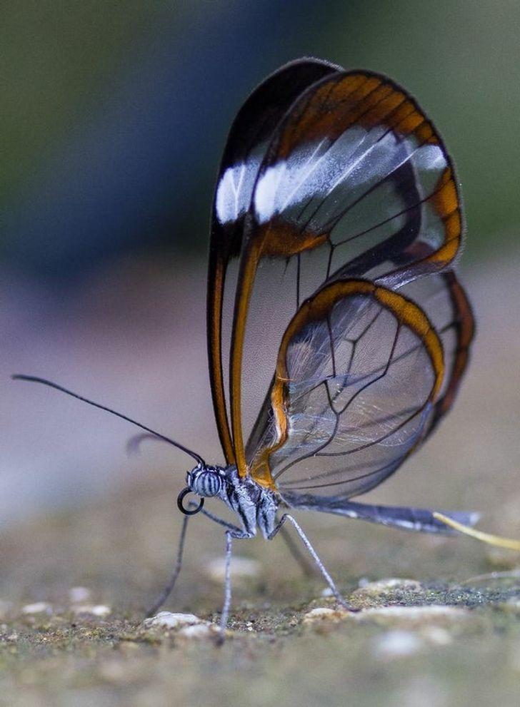 تصاویری از طبیعت که شما را شگفت زده میکنند