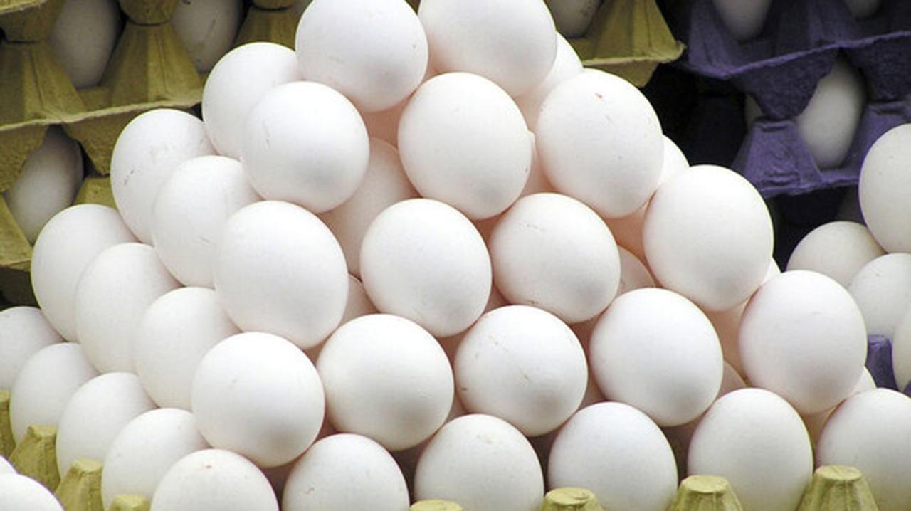 افزایش ۵۲ درصدی تولید تخم مرغ در گلستان