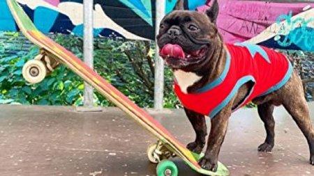 توانایی باور نکردنی سگ بولداگ در بازی اسکیت