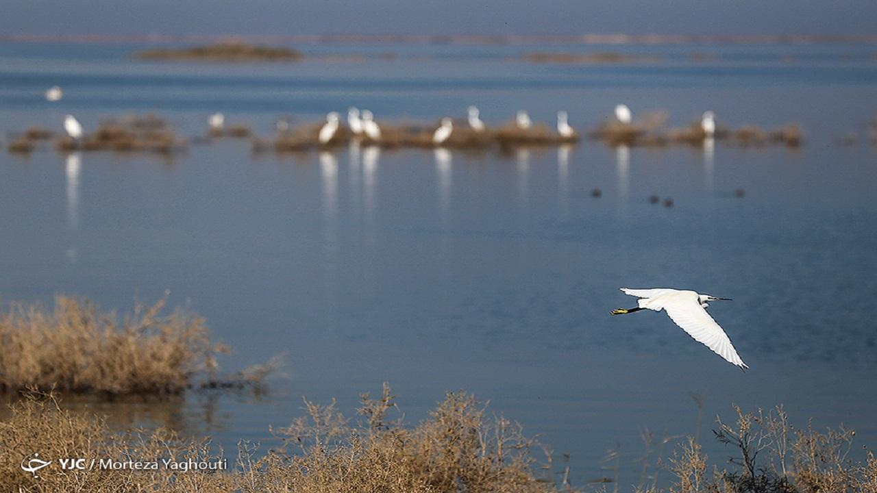 پرندگان در تالاب های خوزستان