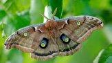 باشگاه خبرنگاران -مشاهده حشره عجیبالخلقه در آمریکای شمالی+ عکس