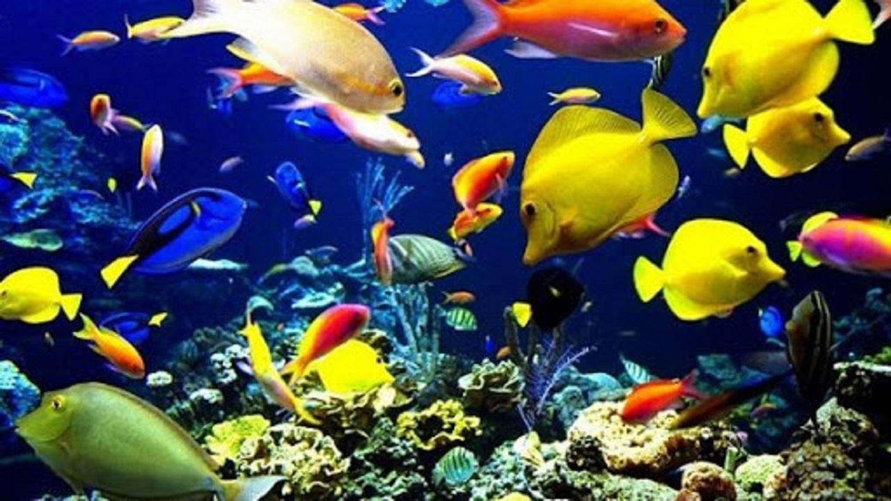 خطر انقراض برای ۱۸ درصد ماهیهای آبهای شیرین ایران