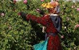 باشگاه خبرنگاران - اشتغالزایی برای ۳۳۰ نفر از بانوان سرپرست خانوار آذربایجان شرقی