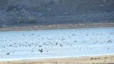 باشگاه خبرنگاران -ورود ده ها هزار پرنده مهاجر به تالابهای استان اردبیل