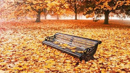 ریزش برگ درختان در فصل پاییز چه تاثیری بر سرعت چرخش زمین دارد؟