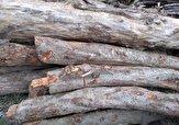 باشگاه خبرنگاران -کشف ۷ تن چوب قاچاق در سیاهکل