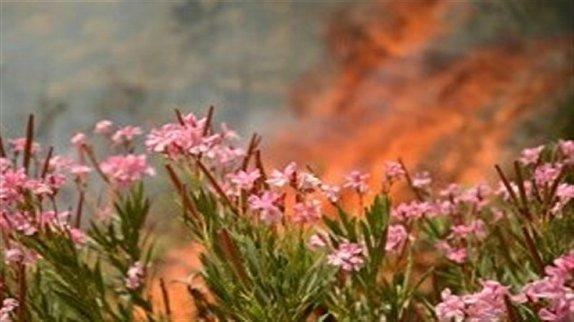 باشگاه خبرنگاران -چادر نارنجی آتش بر خرمن جنگلهای سبز خراسان شمالی/ چرا آتش سوزی جنگلها افزایش داشته است؟