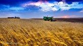 کاهش سطح زیرکشت گندم کذب است/ پرداخت کشاورز کارت راهی برای ارتقای درآمد کشاورزان