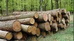 جلوی محموله ۱۱تنی چوب جنگلی قاچاق در ملایر گرفته شد