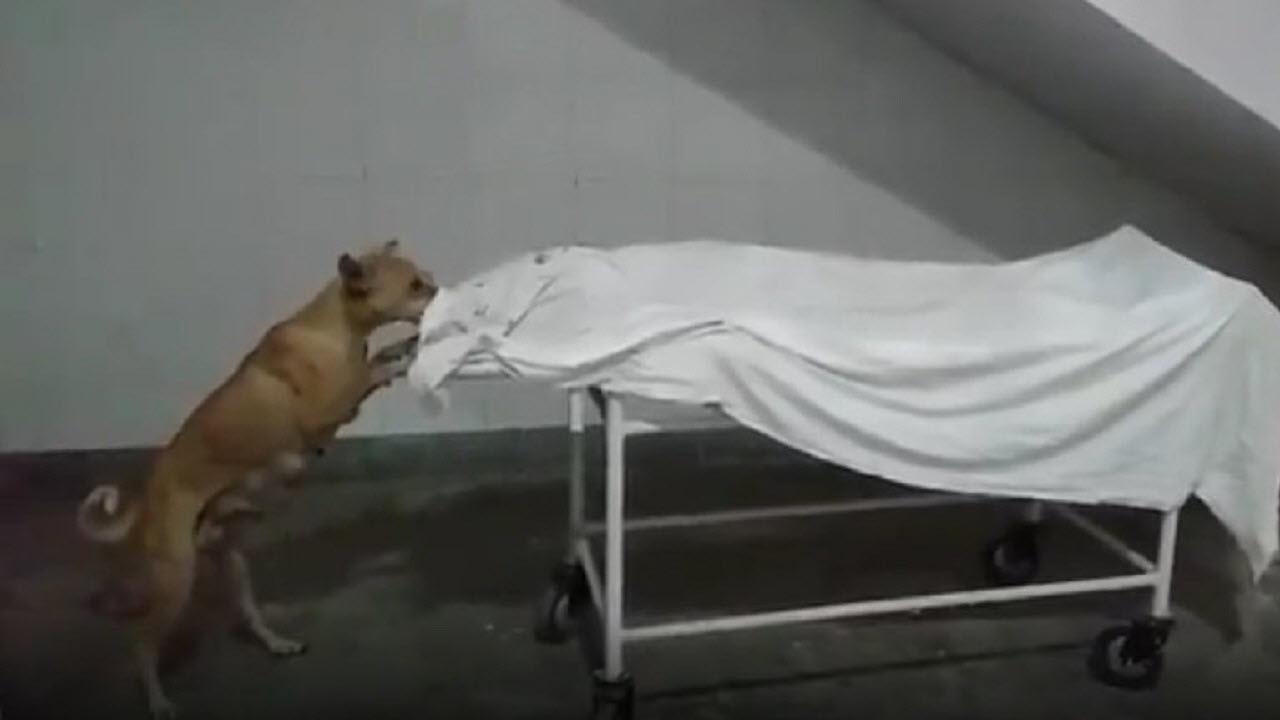 خورده شدن جسد مُرده توسط سگ