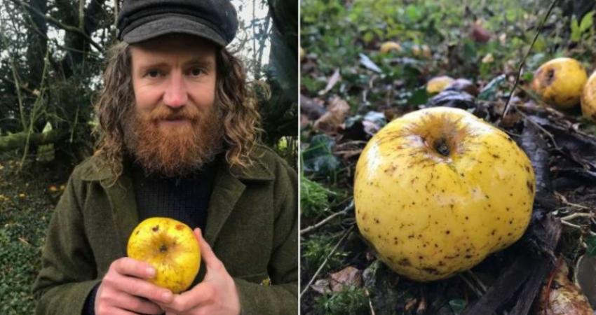 کشف یک نوع سیب عجیب و غریب