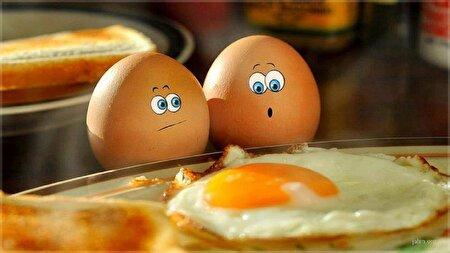 اگر هر روز تخم مرغ بخورید، چه اتفاقی در بدنتان میافتد؟