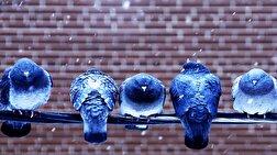 باشگاه خبرنگاران - همدلی حیرت انگیز هزاران کبوتر برای گرم کردن یکدیگر + فیلم