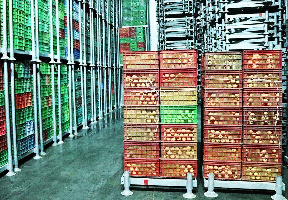 ۶۷ واحد سردخانه محصولات باغی در مراغه فعال است