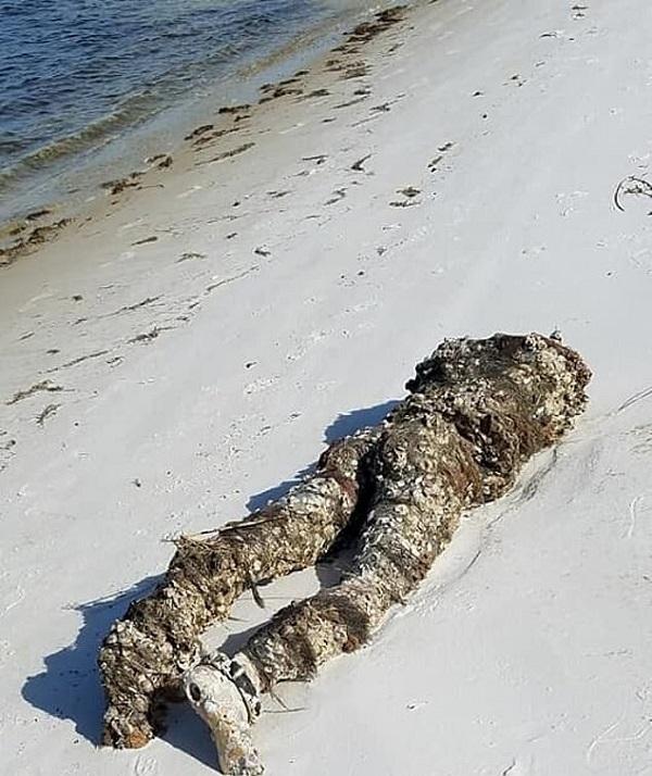 مانکنی بدون سر که شبیه یک جسد بدون سر بود باعث وحشت مردم شد