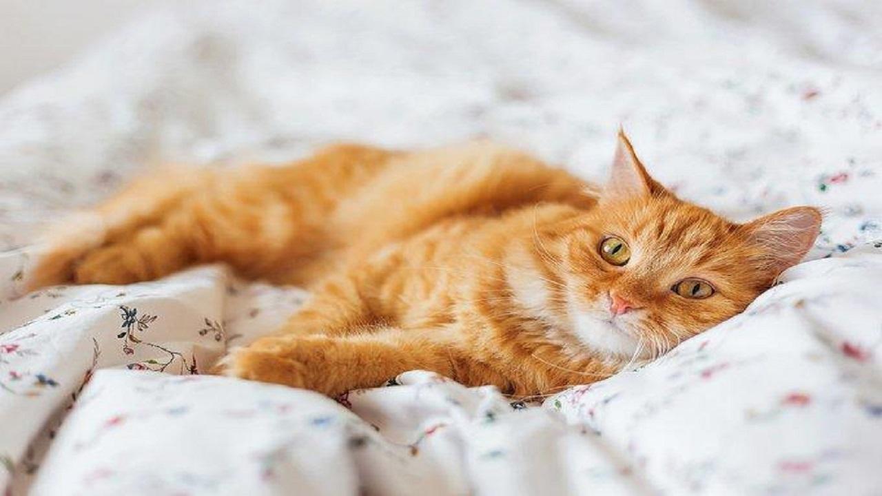 برنامه جدیدی که میو گربه را ترجمه می کند