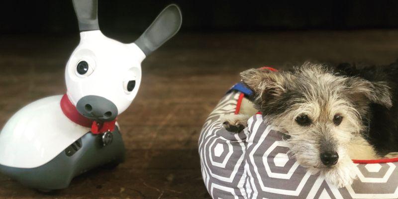 علت برترین رباتها نسبت به سگهای درمانگر