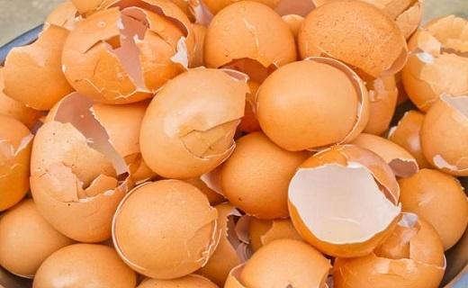 پوسته تخم مرغ، گنجی برای سلامتی که ندانسته دور میریزیم