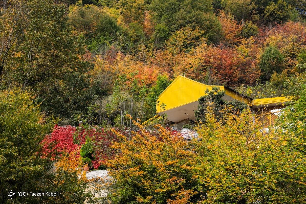 «جنگلهای هیرکانی» در زبان رایج مردم ایران جنگلهای شمال نامیده میشود و دومین اثر بزرگ طبیعی و متراکمترین ناحیه جنگلی ایران را تشکیل میدهند - گلستان