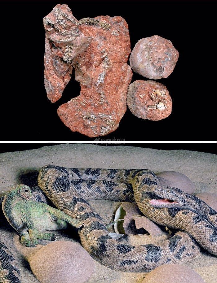 ۱۸ فسیل چشمگیر که تاکنون پیدا شده است